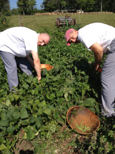 Salem Cross Inn Farmers Dinner_Chefs pulling fresh produce for the evening's meal