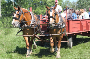 Salem Cross Inn Drover's Roast, horse drawn hay rides