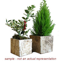 Boxwood Topiary image for Deck the Hall event